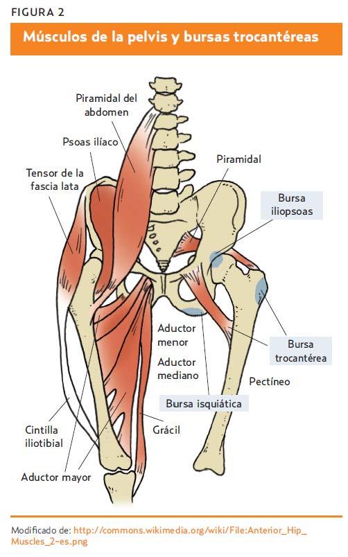 Síndrome de cadera (AMF 2014) A propósito de un caso