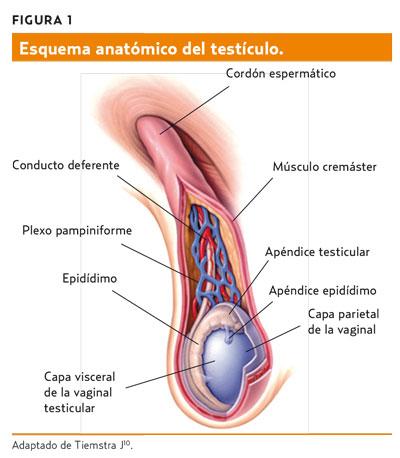 Masa escrotal (AMF 2014) Mejorando la capacidad resolutiva